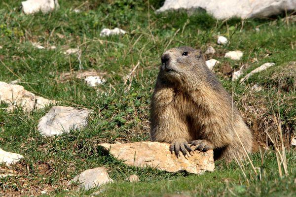 121002 Marmotte 030