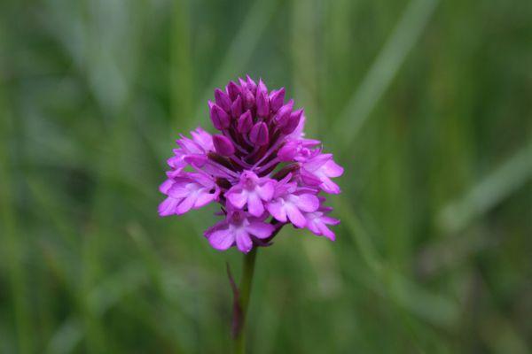 110521 Orchidées 118
