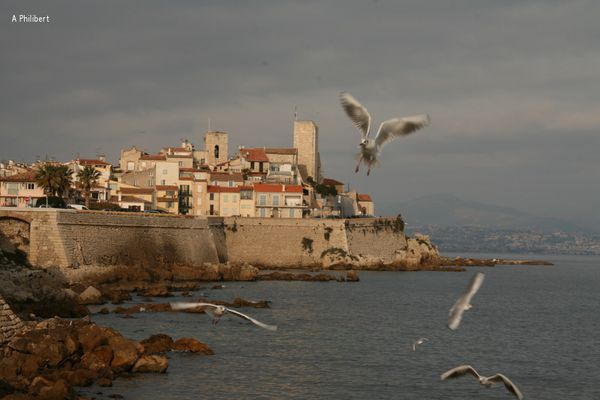 Antibes mouettes