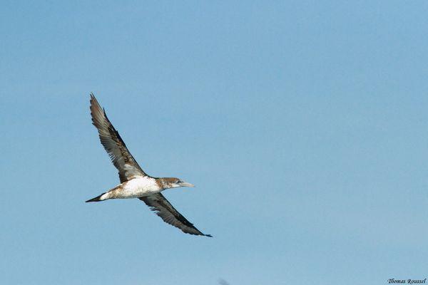 Birdfair-2013-0496.1.jpg