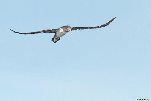 Birdfair-2013-0501.JPG