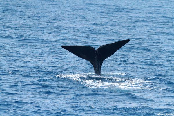 Dauphins-baleines 3950.1