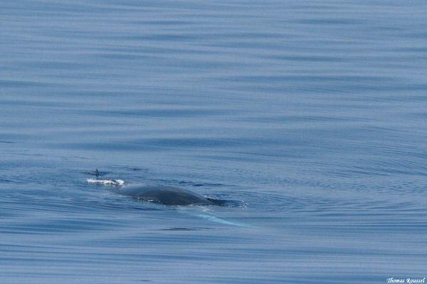 Dauphins-baleines 5486.1
