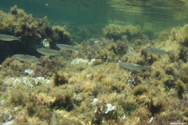 Porquerolles-sous-l-eau 3017