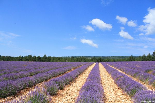 Provence 3079.1