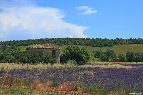 Provence 3223.1