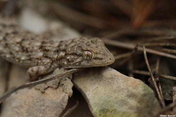reptiles-sud-est 8342.1