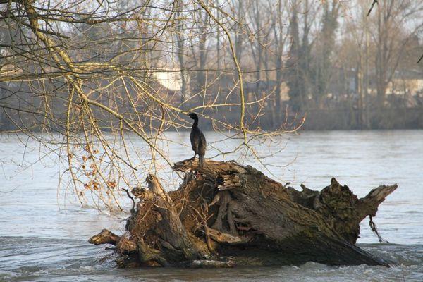 La baie des cormorans chroniques au val for Au jardin de ma grand mere