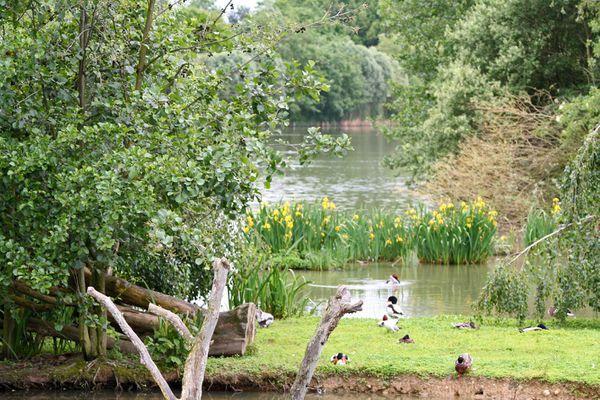 parc-des-oiseaux-005