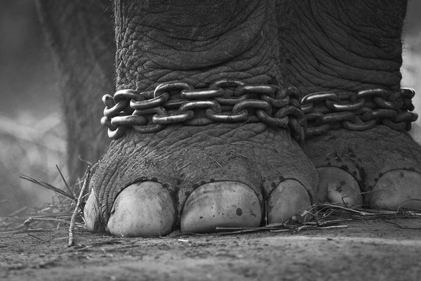ElephantChains© 2008 Pete McGregor