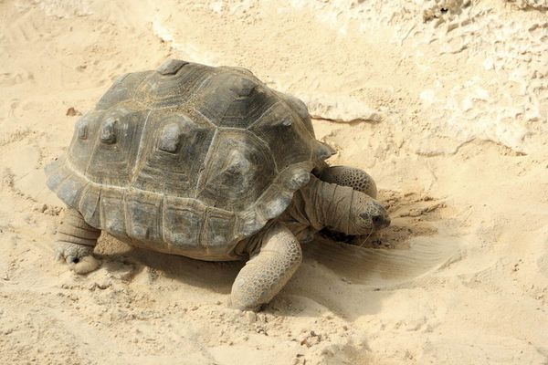 tortue-3