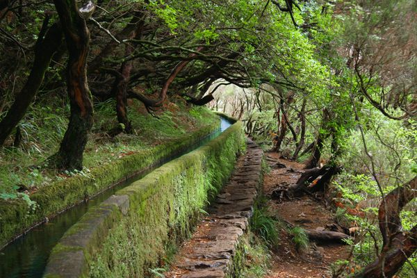 Levada-des-25-fontaines_Madeira.jpg