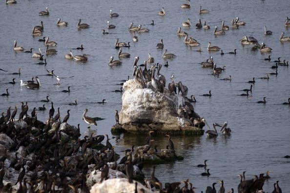 Salton-Sea---Mullet-isl.---D.McNew.jpg