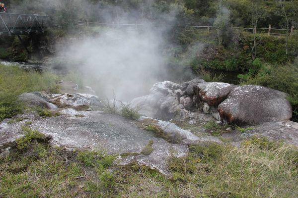 Papakura geyser - 3 - Te Puia NZ