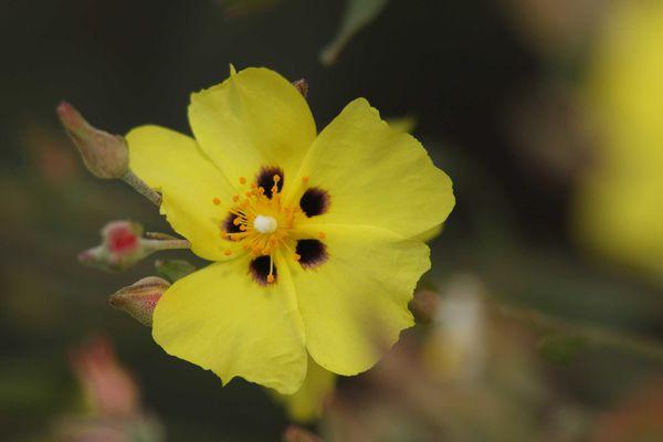 fleurs1166