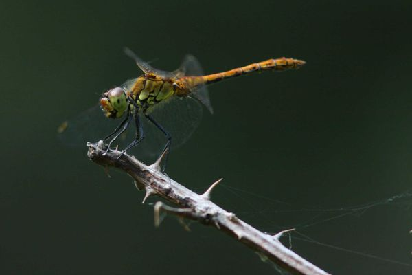insectes2158