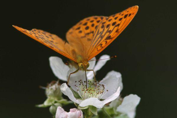 papillons2157