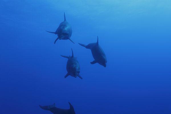 dolphin kcherif03
