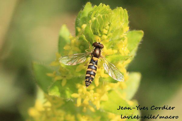 insectes-9600c.jpg