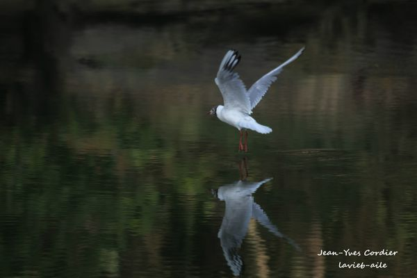 mouettes 5521