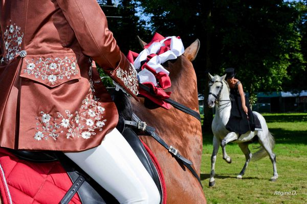 Rencontres equestres luneville 2015