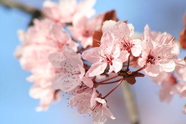 mars2011_100.JPG