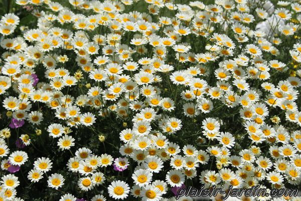 anthemis-sauce-hollandaise.jpg
