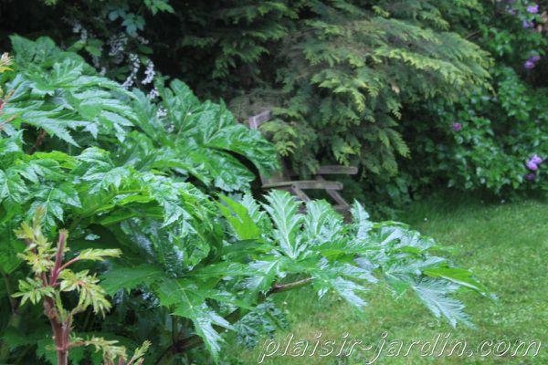 Visite-jardin-Sylvie-16.jpg