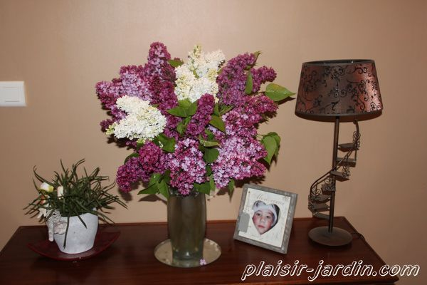 Bouquet-lilas.jpg