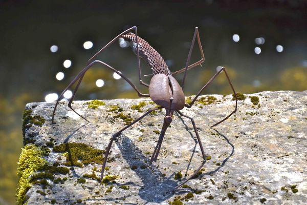 insecte aux longues pattes