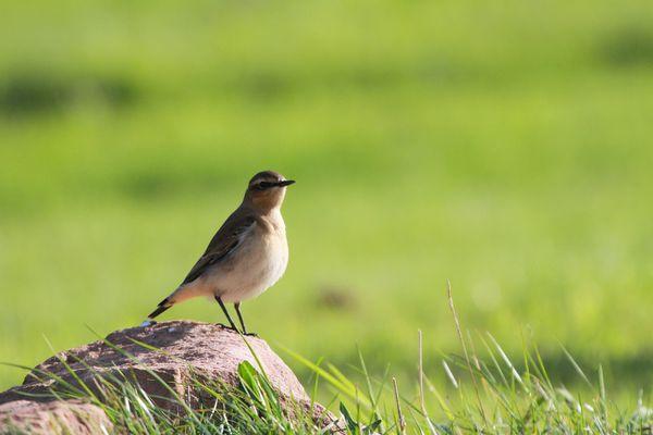 Oiseaux-7598.jpg