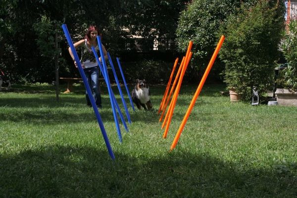 Nos d buts d 39 agility earthwater kennel for Agility au jardin