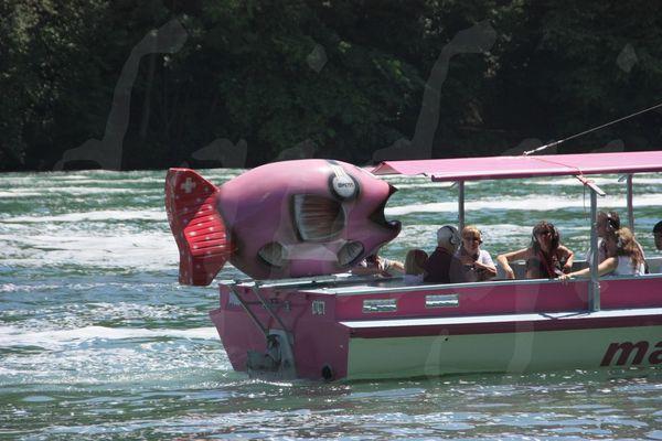 Rheinfall chutes du Rhein 076