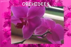 ORCHIDEES MONTAGE