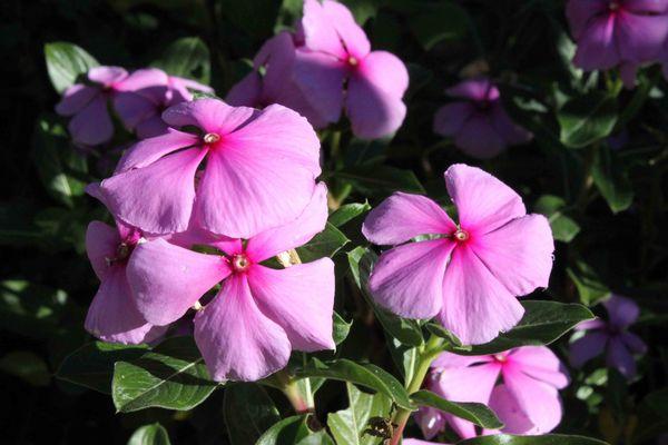 Fleurs 2666