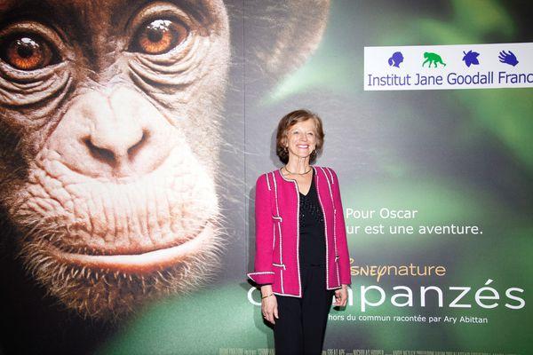 AP_Chimpanzes-15.jpg