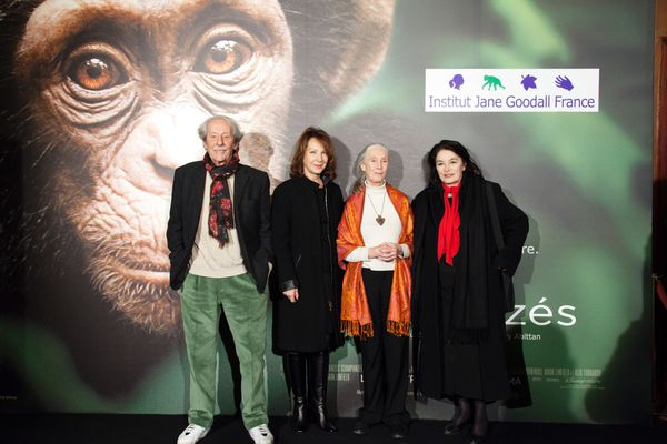 AP Chimpanzés-19