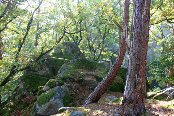 Sentier-des-Roches 1125