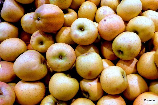 ms02---Pomme-jaunes.JPG