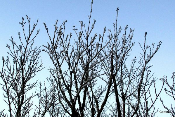oa03---Branches-givrees.JPG