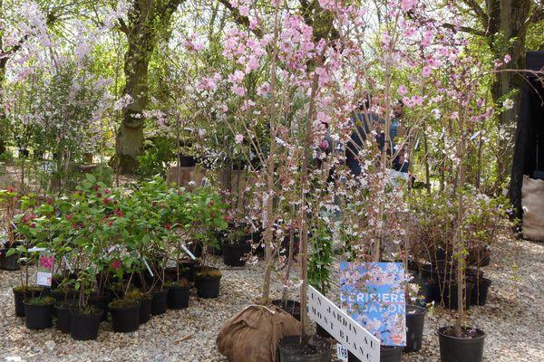st-jean-de-beauregard---5-avril-2014---un-jardinau-mont-bla.jpg
