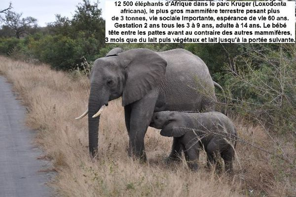 Afrique-du-Sud 4994-redim640
