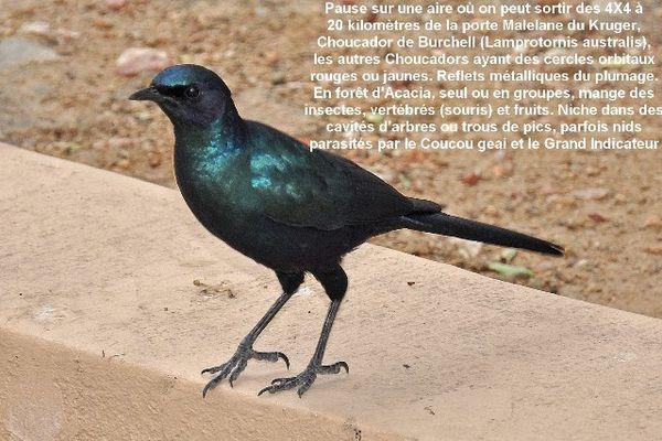 Afrique-du-Sud-5142-redim640.JPG