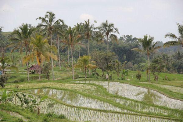1209 Bali 1 (493)