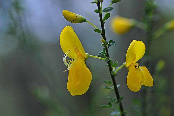 Fleurs-12 1059