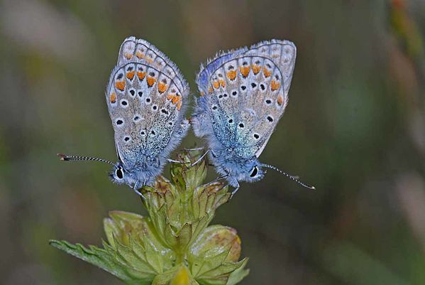 Insectes-papillons--4-1055_modifie-1.jpg