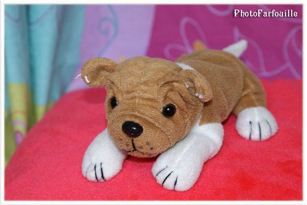 photo de peluche photofarfouille petit chien animallamina. Black Bedroom Furniture Sets. Home Design Ideas