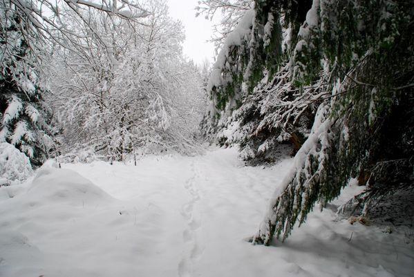 E03 - Fleischnacka et neige