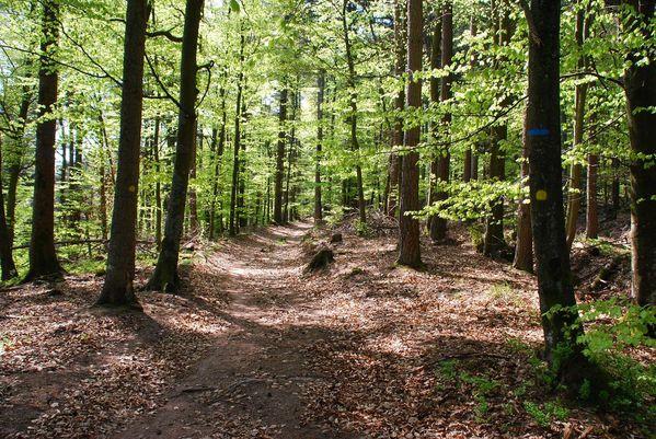 C13 - forêt [1280x768]