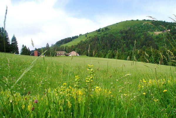 A12 - Hohneck - Gaschney